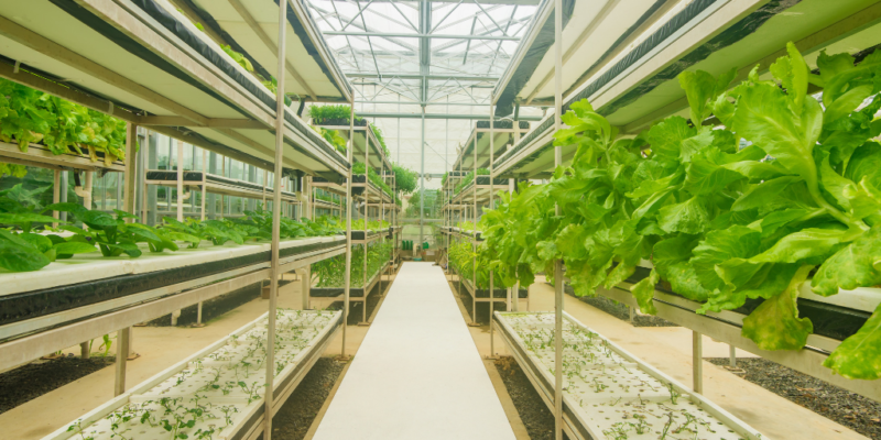 Greenhouse Flooring